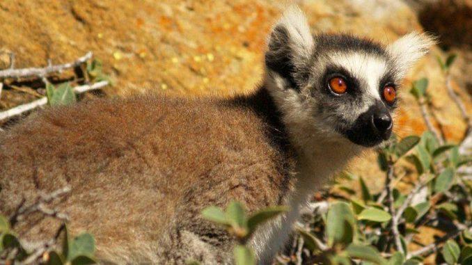 Centre d'appels Madagascar